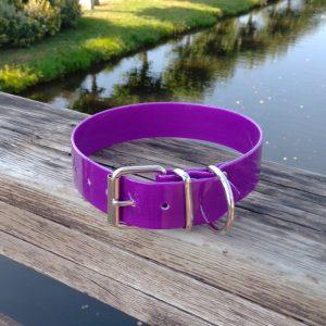 Collar Biothane violeta ancho cinta 3,8 cm hebilla rulo